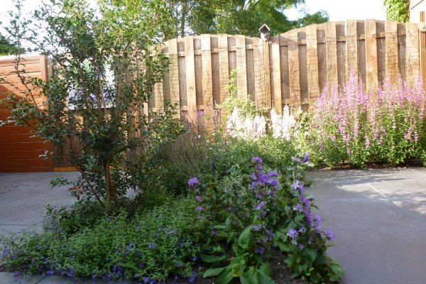 tuin met weelderige beplanting