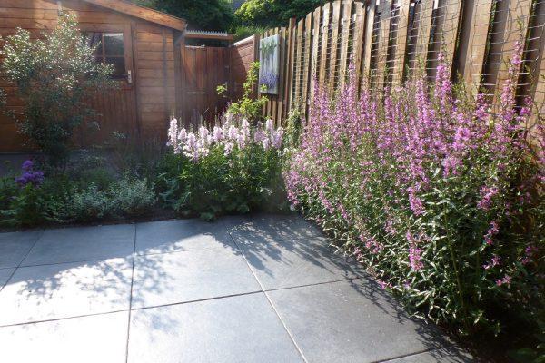 strakke tuin met losse border